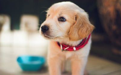 Tips for training your new dog while you're stuck at home